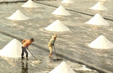 Giá muối tại Phú Yên cao gấp 2 lần nhưng không hàng để bán