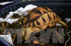 Indonesia bắt một người Nhật mang trộm hàng trăm động vật hoang dã