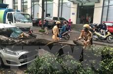 Cây đổ vào người đi đường, 1 người chết, 4 người bị thương