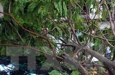 Cành cây có đường kính 40cm rơi sập mái tôn của 2 cửa hàng
