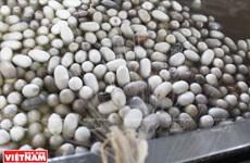 Tìm hiểu quá trình ươm tơ, dệt lụa trên cao nguyên Lâm Đồng