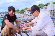 Cá diêu hồng vùng đầm Ô Loan chết hàng loạt, nhiều con bị nổ mắt