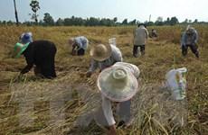 Thái Lan sẽ bán cho Bangladesh và Sri Lanka 400.000 tấn gạo