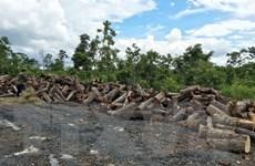 Để mất 75ha rừng, nguyên giám đốc Công ty lâm nghiệp bị khởi tố