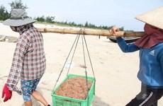 Thời tiết thuận lợi, ngư dân Quảng Trị được mùa ruốc biển