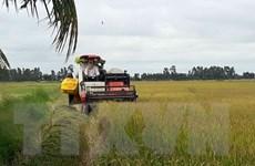 Sản lượng lúa Hè Thu của Long An đạt cao nhất từ trước đến nay