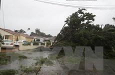 Mỹ: Siêu bão Irma quét qua các thành phố lớn ở bang Florida