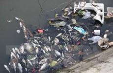 Đã xác định nguyên nhân cá chết hàng loạt trên sông Đại Giang