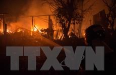 Thương vong do cháy rừng tại Bồ Đào Nha và Tây Ban Nha tăng mạnh