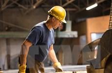 Canada chính thức đưa tranh chấp gỗ xẻ mềm với Mỹ lên WTO