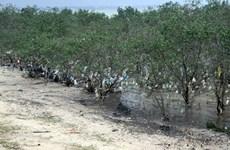 """Nghệ An: Rác """"bức tử"""" rừng ngập mặn nguyên sinh ven đê sông Lam"""