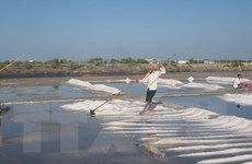 Bà Rịa-Vũng Tàu: Giá muối tăng, diêm dân bán hết lượng tồn kho