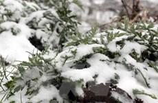 Khách đổ về Sa Pa ngắm mưa tuyết phủ trắng đỉnh Fansipan