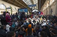 Đức: CSU yêu cầu giám định độ tuổi trẻ vị thành niên muốn xin tị nạn