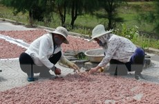 Ngư dân Nghệ An ra khơi đầu năm, được mùa tôm, ruốc biển
