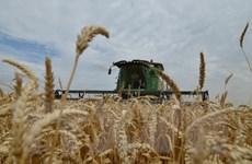 Tổng thống Putin: Xuất khẩu nông sản của Nga đang tăng cao