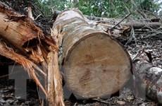 Tạm đình chỉ chức vụ Trưởng ban Quản lý rừng phòng hộ Sông Tiêm