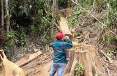 Xử lý nghiêm hai vụ phá rừng tại huyện Đông Giang và Nam Giang