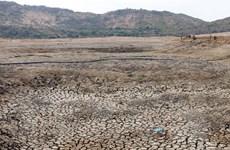 [Photo] Ninh Thuận nắng nóng kéo dài, người chăn nuôi gặp khó khăn