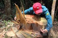 [Photo] Nhiều vụ phá rừng phòng hộ đặc biệt nghiêm trọng
