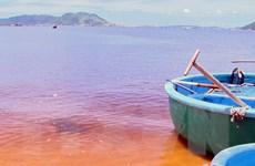 Xác định nguyên nhân của vệt nước màu vàng hồng trên biển Quảng Bình