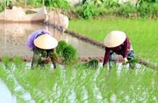 Chuyển giao công nghệ và sử dụng độc quyền hai giống lúa mới