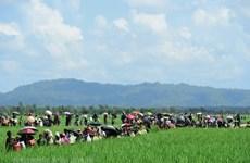 Bangladesh tìm kiếm sự hỗ trợ của nhiều nước về vấn đề người Rohingya
