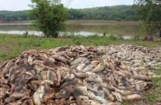 Hải Dương: Cá chết hàng loạt ở xã Nam Tân, thiệt hại hàng tỷ đồng