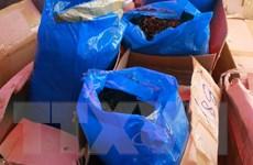 Hà Nội: Tiêu hủy gần 2,3 tấn lá Khat chứa chất ma túy