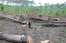 Vụ phá rừng thông ven Quốc lộ 28: Kiến nghị thu hồi dự án