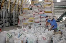 """Bài toán của ngành gạo: Nhìn từ chuyện """"sốt"""" IR50404 đến… """"ế"""" nếp"""