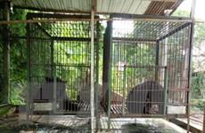 Liên tiếp giải cứu hai cá thể gấu ngựa ở Lâm Đồng trong vòng 1 tuần