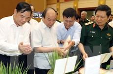 Thủ tướng dự Hội nghị sơ kết Đề án về hiện đại hóa nông nghiệp