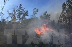 Nghệ An: Nắng nóng gay gắt, đám cháy rừng thông lan rộng