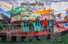 Quảng Ninh: Nhiều tàu khai thác thủy sản bằng phương pháp tận diệt