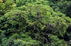 Động Châu-Khe Nước Trong: Khu bảo tồn thiên nhiên vẫn nằm trên giấy