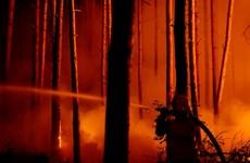 Đức: Cháy rừng tại khu vực còn sót bom đạn thời chiến tranh