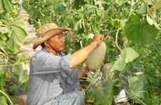 Cơ hội hợp tác với New Zealand nâng cao giá trị hàng nông sản