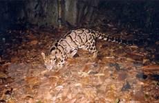 Tăng cường hợp tác quốc tế nhằm bảo tồn động vật hoang dã nguy cấp