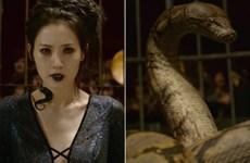 """Warner Bros tung trailer cuối cùng cho """"bom tấn"""" Fantastic Beasts"""