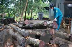 Yêu cầu công an khẩn trương điều tra vụ phá rừng tại Bình Phước