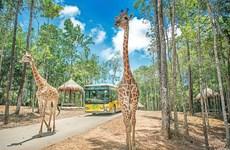 Hà Nội sắp có Safari trên cạn và trên sông đầu tiên tại Việt Nam