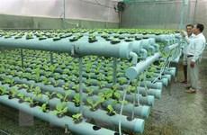 Diễn đàn Việt Nam-Ấn Độ thúc đẩy tầm nhìn mới cho nông nghiệp