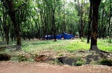 Quảng Ngãi: Vác rựa đâm chém chết người vì tranh chấp 90 cây keo
