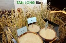 Xuất khẩu gạo 10 tháng đạt 5,2 triệu tấn với kim ngạch 2,6 tỷ USD