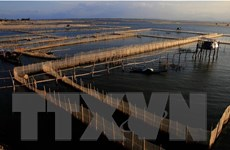 Bắc Giang mở rộng diện tích nuôi thủy sản an toàn sinh học