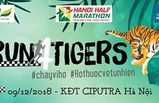 Hơn 750 người từ 31 quốc gia tham gia 'Chạy vì hổ' năm 2018