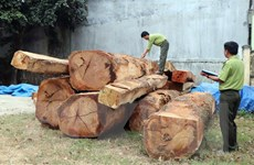 Phát hiện bãi tập kết gỗ trái phép ngay trong khu dân cư tại Kon Tum