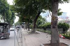 Hà Nội: Chặt hạ, di dời gần 500 cây xanh mở rộng đường Láng