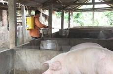 Xuất cấp 50.000 liều vắcxin lở mồm long móng type O cho Hà Tĩnh